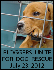 Bloggers Unite for Dog Rescue