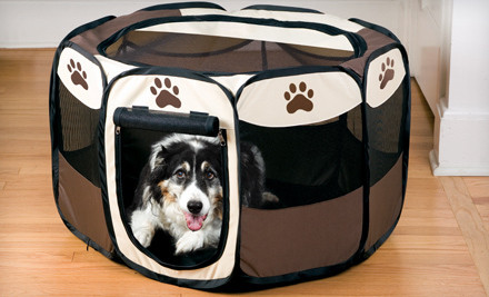 cute dog in adorable pet play pen, brown and tan with paw print design
