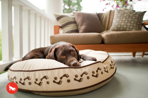 chocolate lab lying on P.L.A.Y. dog bed with footprint pattern, wayfair promo code deal on pet products