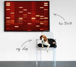Pet DNA Wall Art
