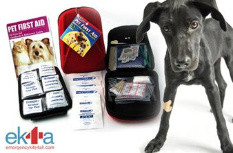 pet first aid kit, black dog with bandage, emergency guide for pets