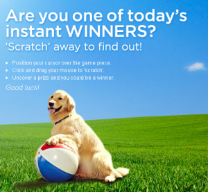 cute large dog with ball on grass, purina instant win game