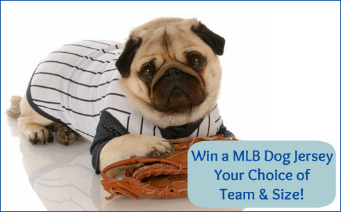 Win a MLB Dog Jersey