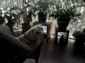 patio pup Daisy