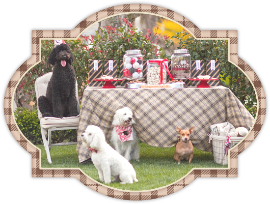 nutro dog food, dog party, picnic table, dogs, party, dog food