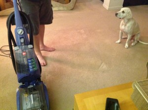 Hoover carpet cleaner, max extract 60, dog, pet stains, carpet