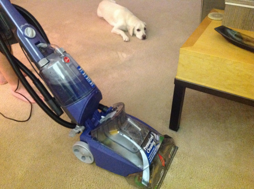 hoover carpet cleaner, max extract, dog carpet, carpet, dog