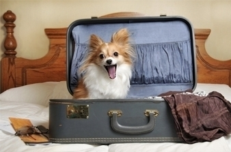 cute photo of dog in suitcase, dog vacay, dog boarding