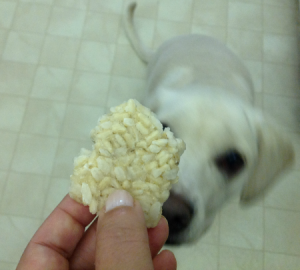 frozen brown rice treats for Dogs, dog treat recipe