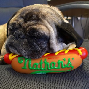 nathan's hot dog, dog toy, squeaky toy, dogs