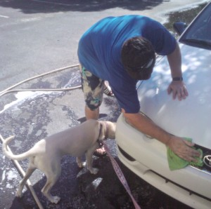 Daisy car wash inspector