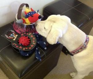 petsmart, dog toys, bret michaels, daisy, dog