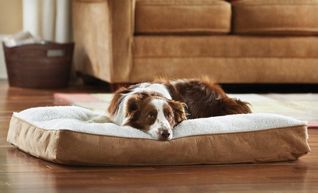 dog bed, animal planet, groupon goods, sherpa, memory foam