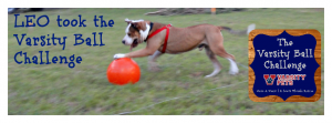 Varsity Ball Facebook Likes for Rescue Dogs