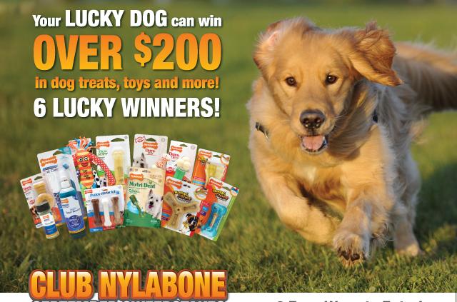 Nylabone Club Giveaway