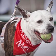 adopt me, shelter dog for adoption