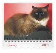 cat photo calendar