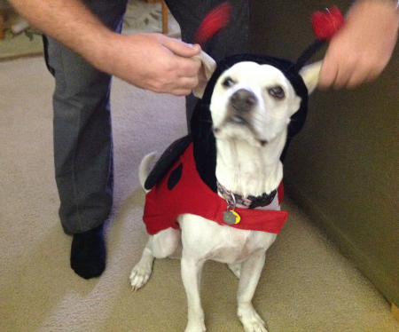 cute lady bug costume, halloween costume for dogs