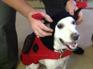 daddy helping Daisy try on costume