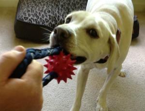 daisy bret michaels tug toy