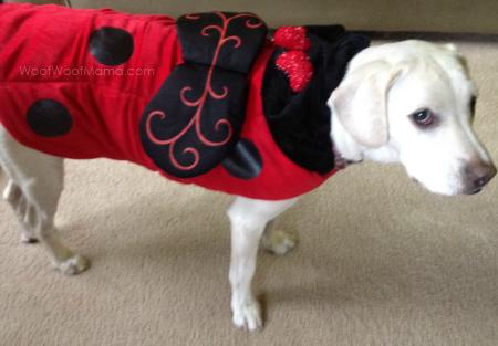 daisy lady bug halloween costume petsmart
