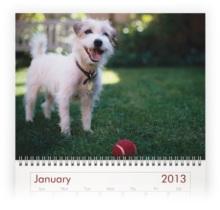 dog photo calendar