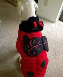 PetSmart lady bug costume back