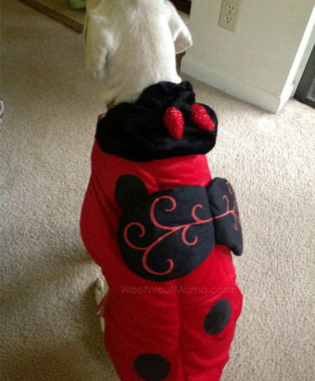 PetSmart lady bug costume back