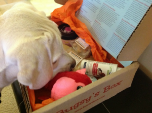 Bugsy's Box mystery box subscription for dogs