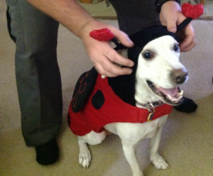 daisy the dog in her ladybug halloween costume