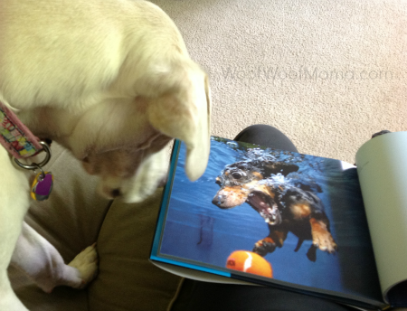 Daisy Underwater Dog Book