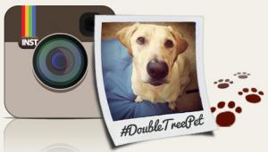 Doubletree Instagram Pet Photo Contest
