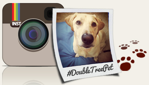 Doubletree Instagram Pet Photo Contest