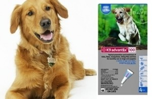 K9 Advantix Blue for dogs over 55 lbs