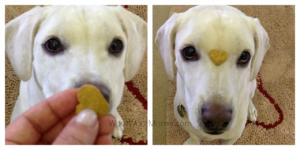 daisy dog doing tricks for Newman's own organic dog treats