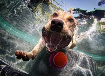 Underwater Dog with ball