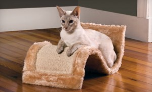 cat scratcher and lounger