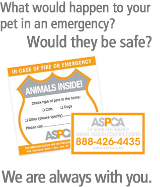 free pet safety sticker and magnet pack from ASPCA