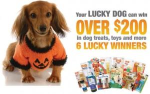 win nylabone dog toys and treats