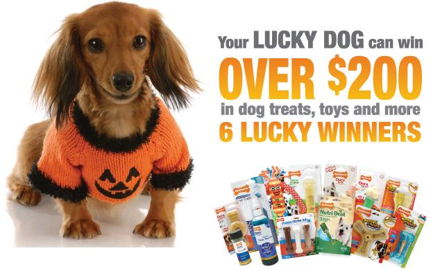 win nylabone dog toys and treats