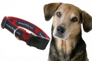 rescue dog, rescued with love, dog collar, dogs