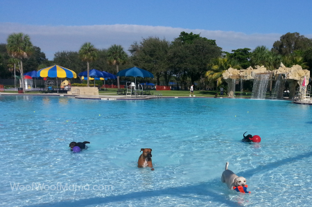 Wordless wednesday daisy and fin at the water park