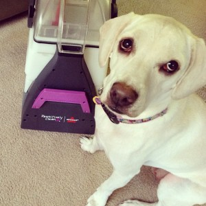 Bissell pet carpet cleaner printable coupon