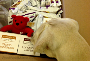 Daisy dog checking out our Nutrisystem food deliver and bear