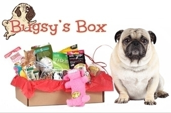 bugsys box for dogs