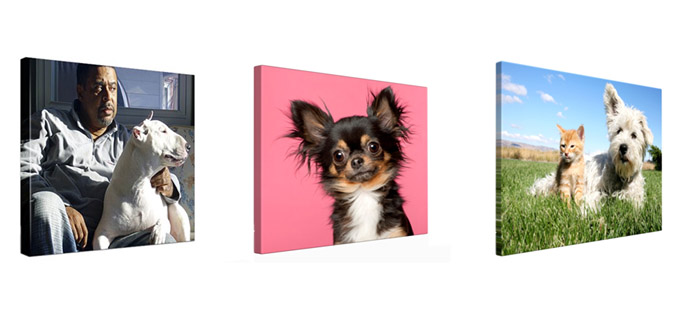 photo canvas dogs