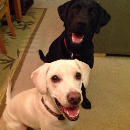 Daisy and her pal Fin are two happy dogs!