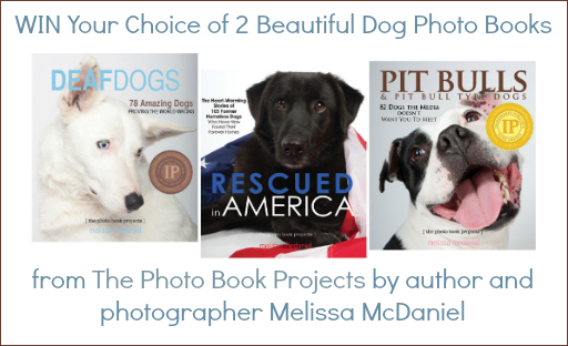 dog photo books by Melissa McDaniels