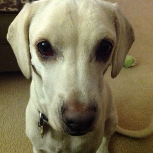 Daisy begging for popcorn, cute dog photo