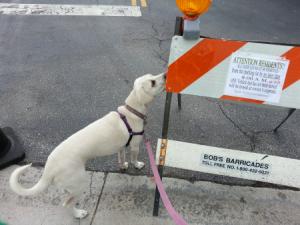 dog barracade